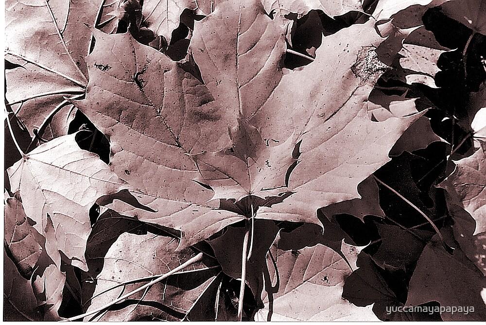 autumn 3 by yuccamayapapaya