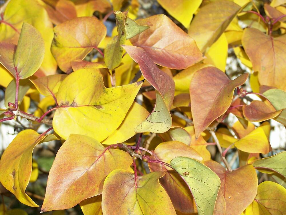 Lilac Autumn Leaves by Gene Cyr