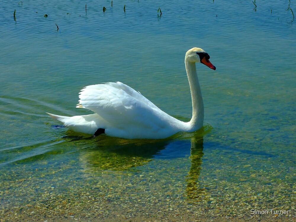 Swan by Simon Turner