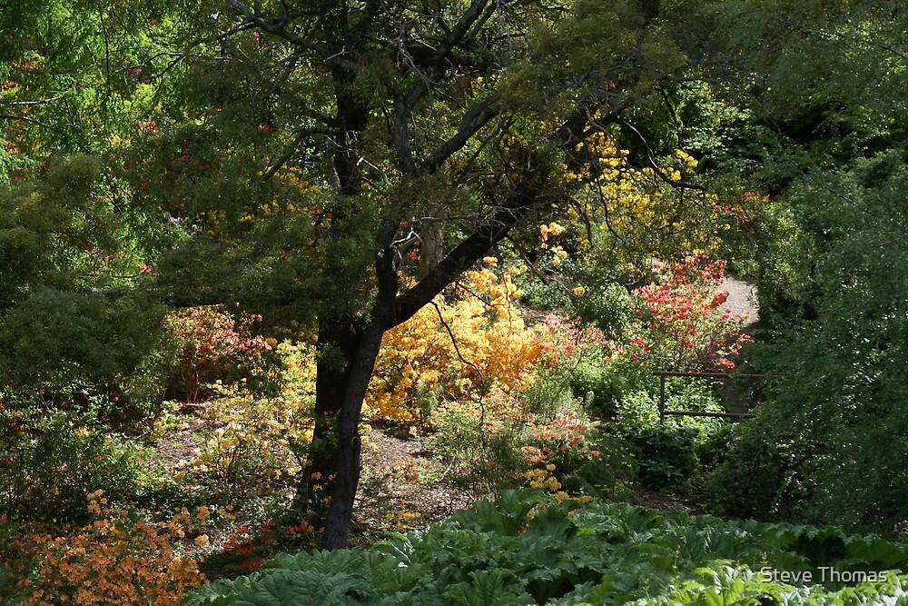 Sacred grove by Steve Thomas