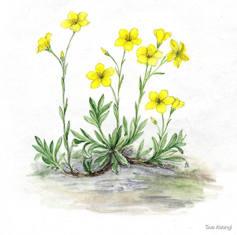 Dolomite Flax - Linum dolomiticum borbasii by Sue Abonyi