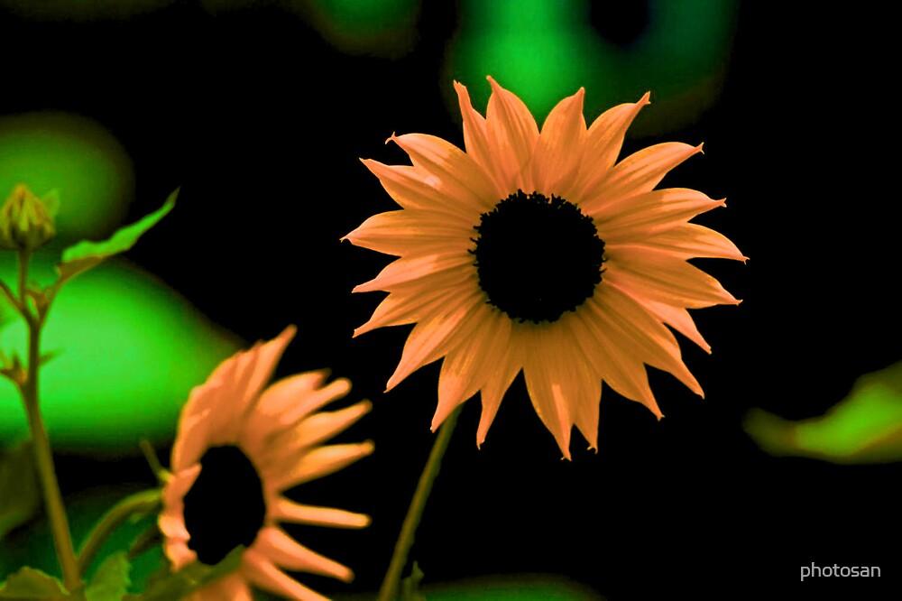 Sunburst Flower by photosan