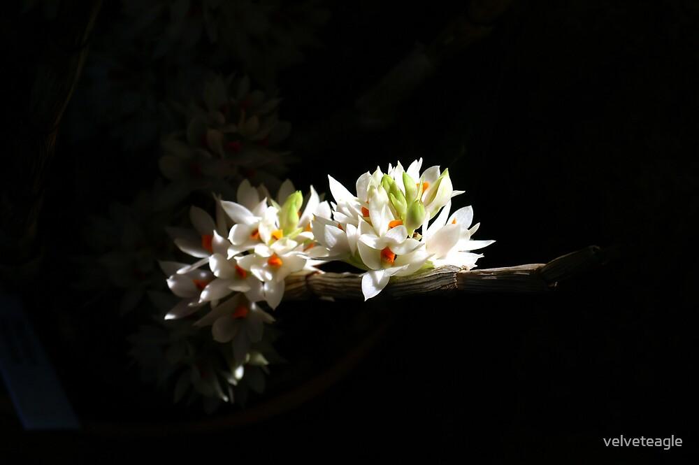 A Peek Into Light by velveteagle