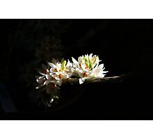A Peek Into Light Photographic Print