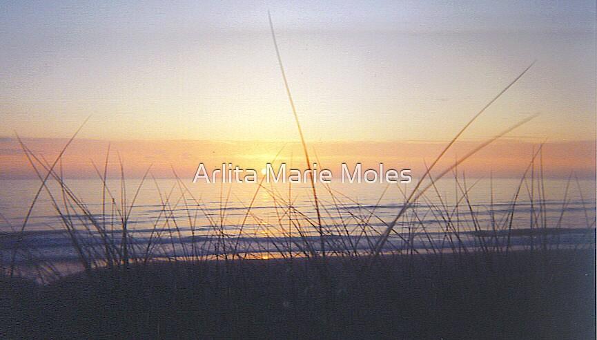 Newport Sunset by Arlita Marie Moles