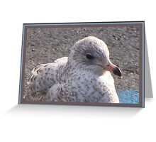 Freckled Gull Greeting Card