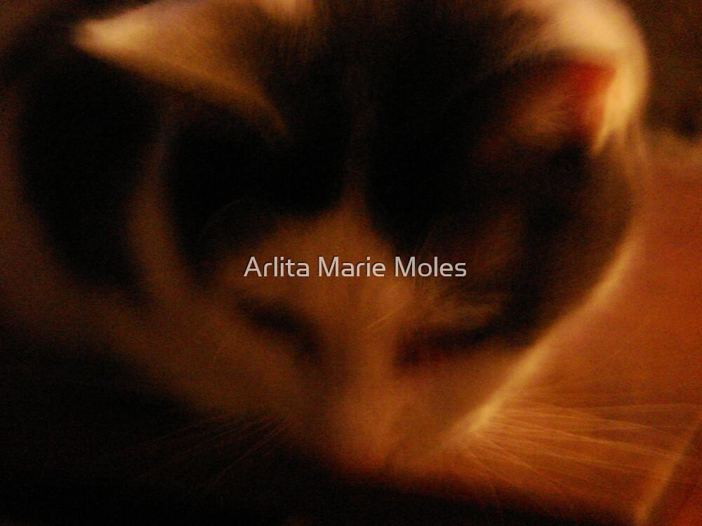 Soft Kitty by Arlita Marie Moles