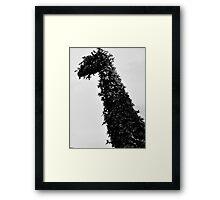 giraffe topiary Framed Print