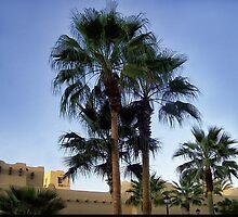 Tree's In Mexico by ✿✿ Bonita ✿✿ ђєℓℓσ