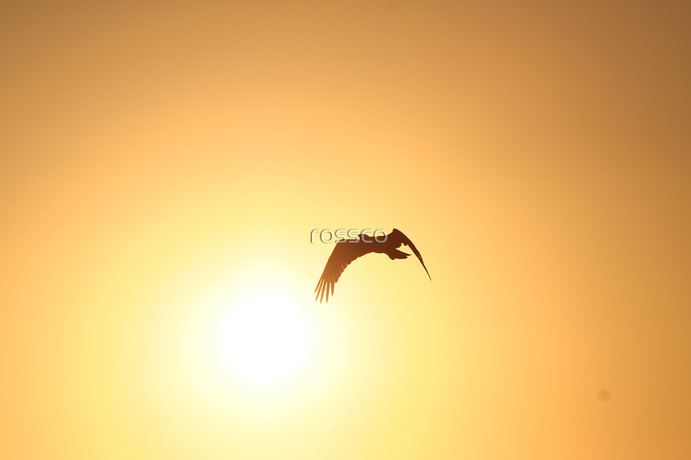 Heading Home by rossco