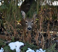 I See You by Tracy Deptuck