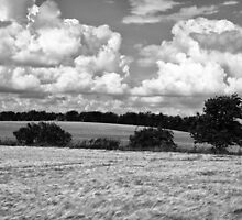 Wheat field in black and white by Ron Zmiri