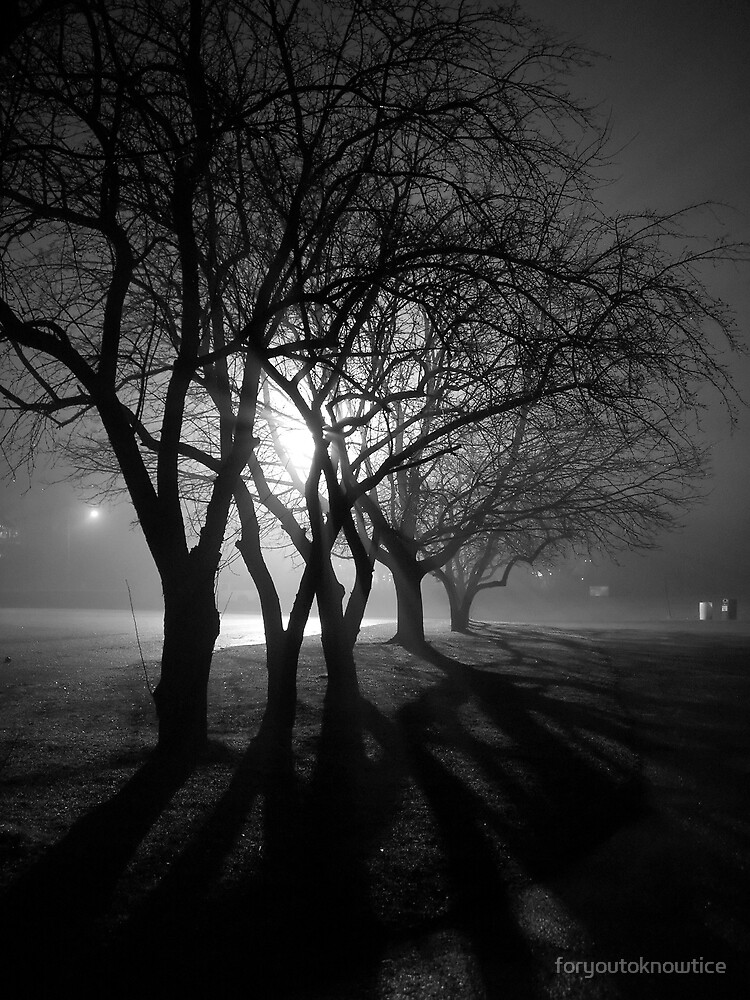 Fog Lit Trees by foryoutoknowtice