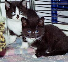 kitty cats by rhysy