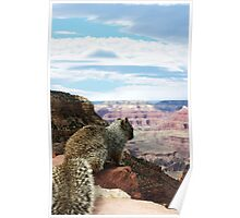 Squirrel Overlooking Grand Canyon Poster