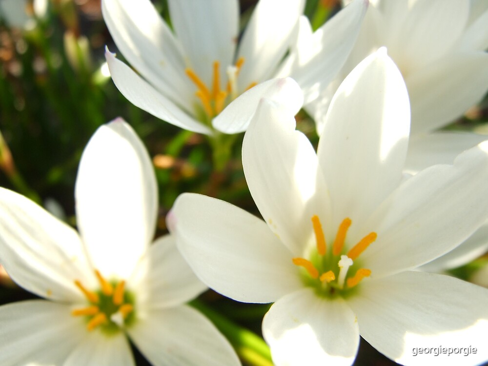 Flowers by georgieporgie