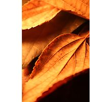 Autom leafs Photographic Print