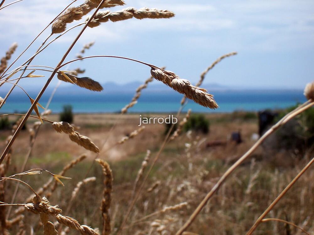 Grass by jarrodb