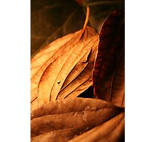 Golden leafs Photographic Print