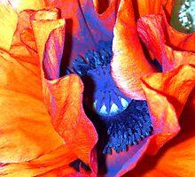 orange by Susanne Holmgren