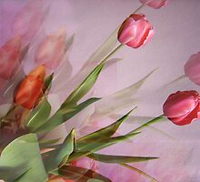 Tulips fantasy by Tanya Muller