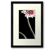 Slender Stem Framed Print