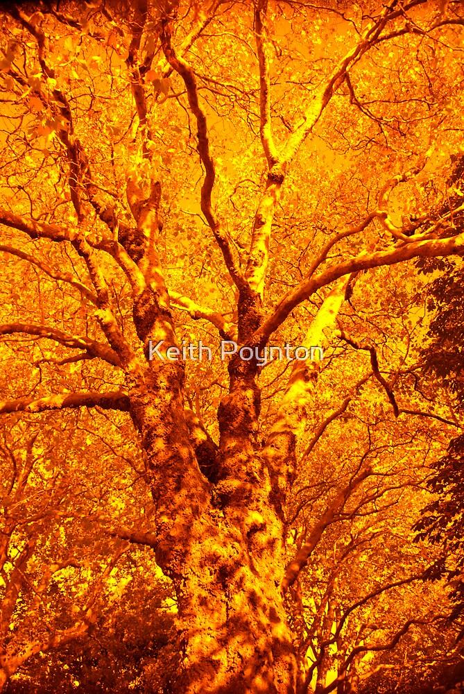 Tree Fire by Keith Poynton