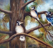 Baby Jays by Brenda Thour