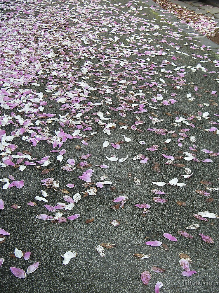 Magnolia petals by Tiffany Ho