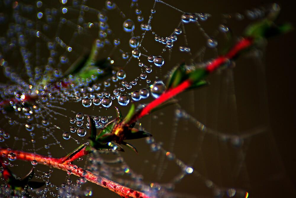 spide web by Robert Kiesskalt