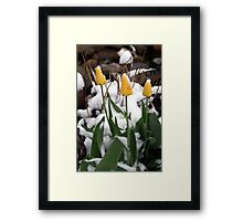 Spring Stopped Cold Framed Print