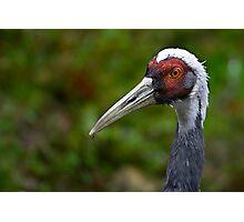 Crane Beak Photographic Print