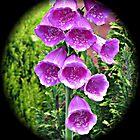 Foxglove Vignette by BlueMoonRose