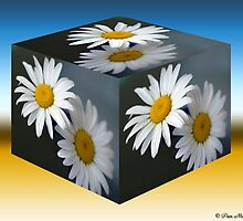 Daisies Cubed by Pam Moore