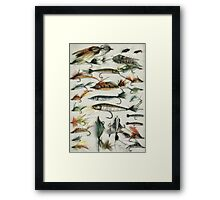 1920's Fishing Flies Framed Print