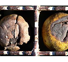 Walnuts Photographic Print