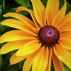 A Ray Of Sunshine by naturelover