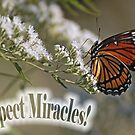 Expect Miracles! by Bonnie T.  Barry