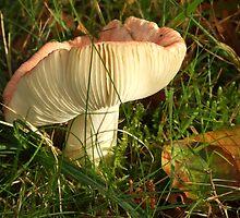 Autumn fungus by Sjouke Veenbaas