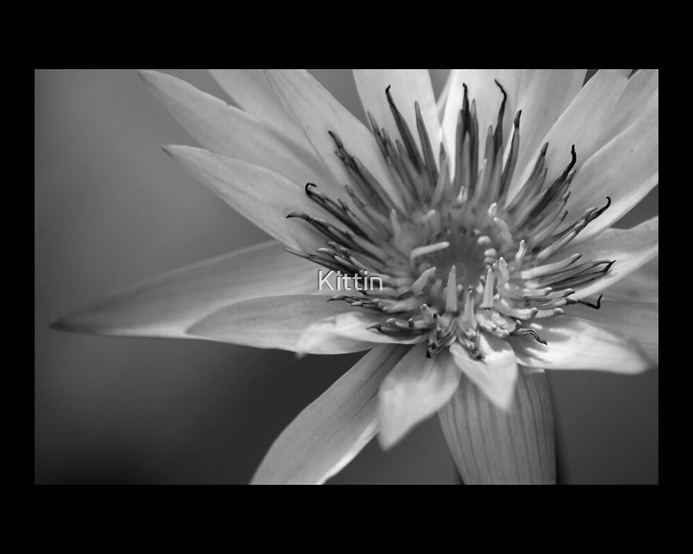 flower 23 by Kittin
