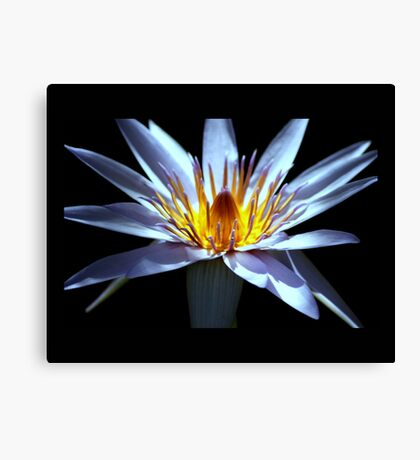 flower 24 Canvas Print