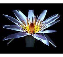 flower 24 Photographic Print