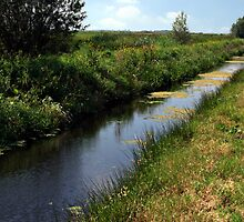 Ditch in pasture by Sjouke Veenbaas