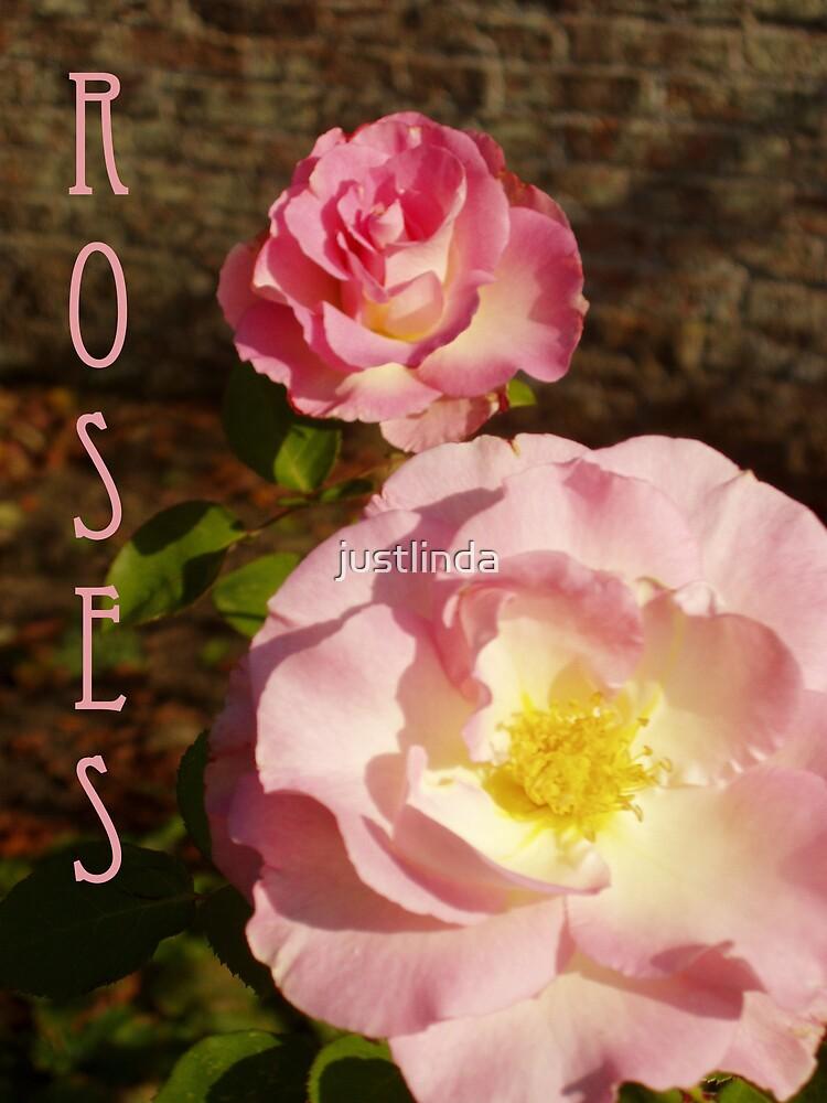 Roses by justlinda