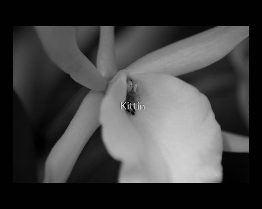 flower 29 by Kittin