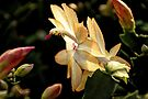 Christmas Cactus - White Swan Floral by MotherNature