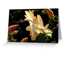 Christmas Cactus - White Swan Floral Greeting Card