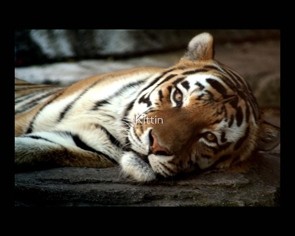 tiger 01 by Kittin