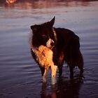 Indy's sunset dip.   by Michael Haslam