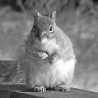 Squirrel in Black & White by Martha Medford